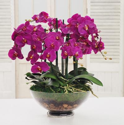 Mor Orkidenin Anlamı