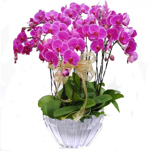 Pembe Orkidenin Anlamı
