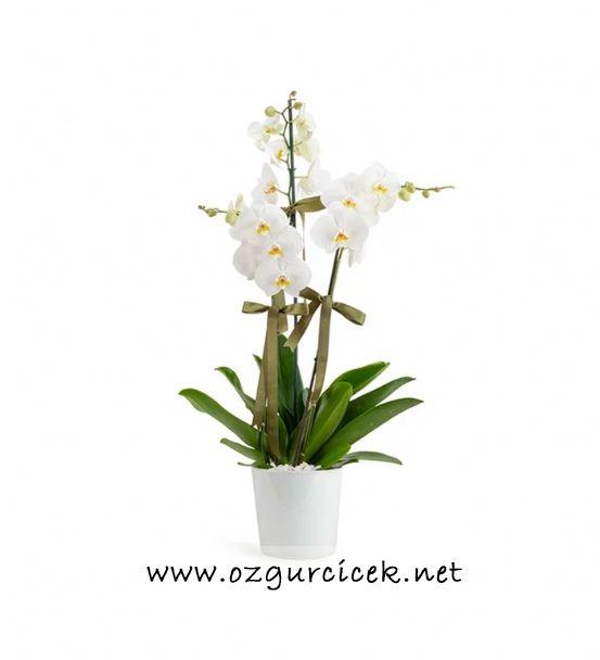 3 Dal Beyaz Orkide Çiçeği