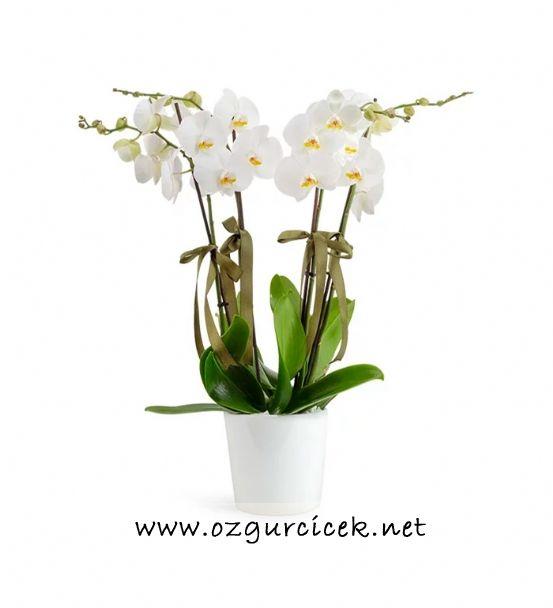 4 Dal Beyaz Orkide Çiçeği