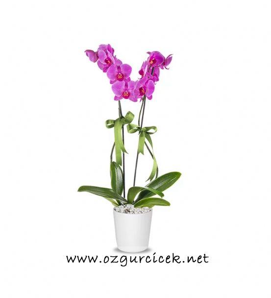 2 Dal Mor Orkide Çiçeği