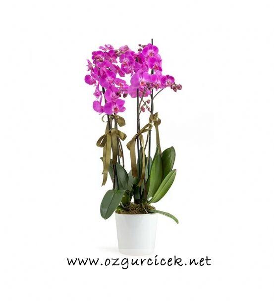4 Dal Mor Orkide Çiçeği