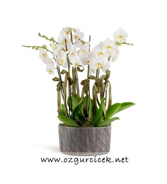 6 Dal Beyaz Orkide Çiçeği