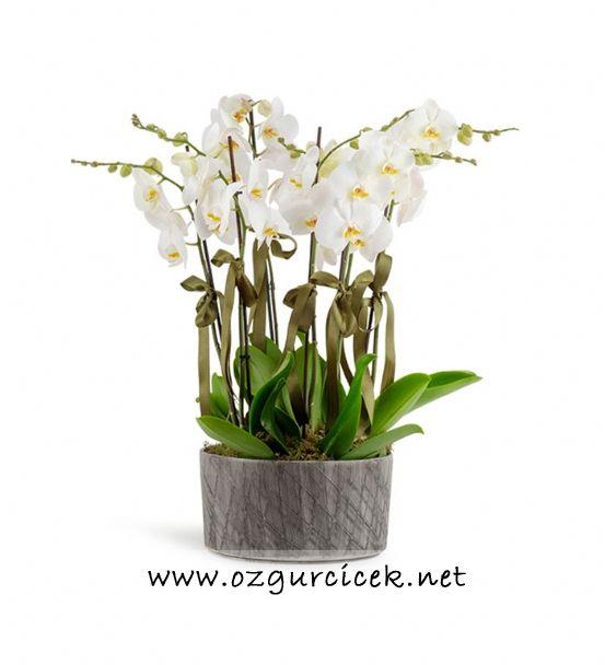 8 Dal Beyaz Orkide Çiçeği